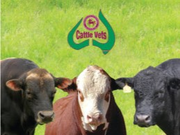 cropped bulls